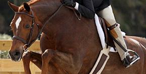 Hunter Jumper Horses for Sale | Hunters, Jumpers, Equitation Horses
